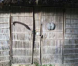 Inflorescência masculina e fruto feminino na porta duns banhos na Côte d'or de Praslin.