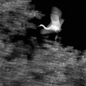 Fantasmas en el río 14-L