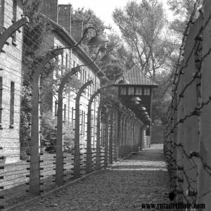 Auschwitz Ruta del Mate (3)