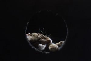 cat-3018178_960_720