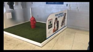 Este servizo para mascotas está instalado nun aeroporto internacional
