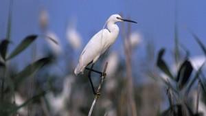 As aves alegran os paseos FOTo CULLEREIRO