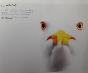 2 paxaro1