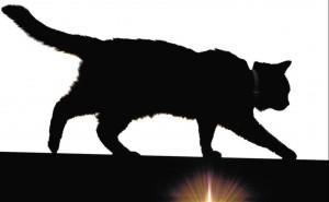 gato-U30167926376zeF--1968x1216@La Verdad-LaVerdad
