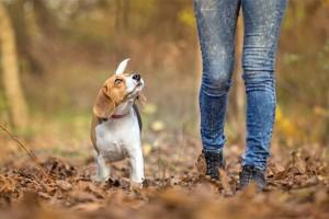 pasear-a-un-perro-sin-correa-696x464